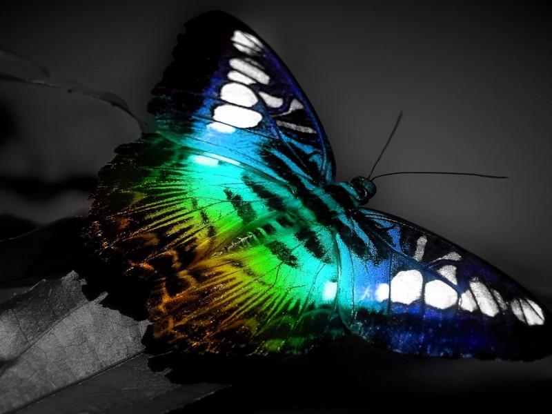 Schmetterling hintergrundbilder