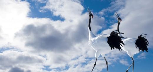 hindergroundbilder Vögel im Flug