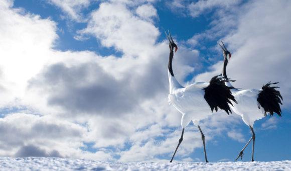 Hintergrundbilder Vögel 14