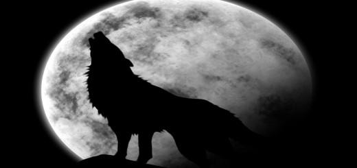 Wolf und Mond hinterdrund